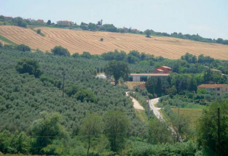 Agriturismo Marche Agriturismo Marche with restaurant in an olive grove
