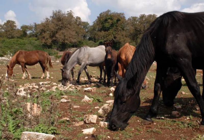 Agriturismo Puglia Agriturismo quietly located in the countryside of Puglia