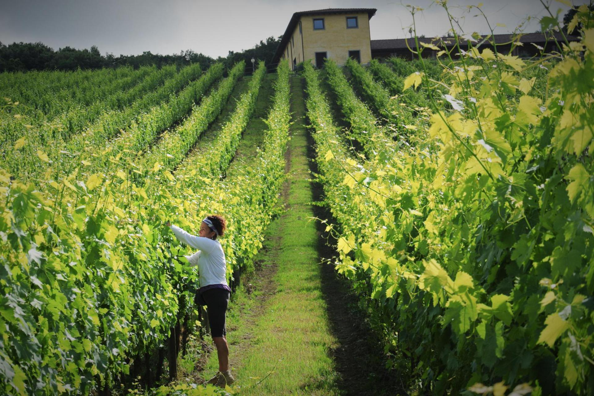 Agriturismo Piedmont Luxury agriturismo Piedmont, ideal for wine and food lovers