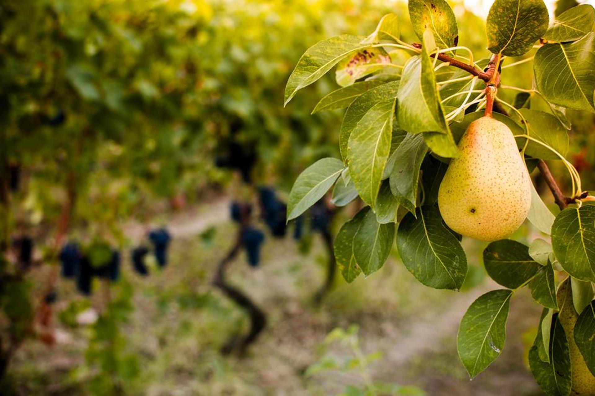 Agriturismo Piedmont Romantic agriturismo in the hills of Piedmont